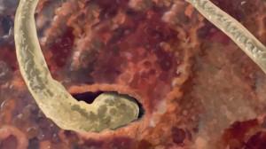 Spermie dringt in Eizelle ein